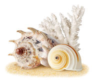 Escudos do mar imagem de stock royalty free