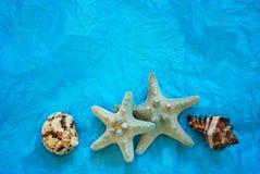 Escudos do mar Fotos de Stock Royalty Free