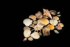 Escudos do mar foto de stock