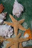 Escudos do mar. Fotos de Stock Royalty Free