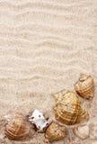 Escudos do mar com areia Imagem de Stock Royalty Free