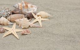 Escudos do mar com a areia como o fundo Foto de Stock