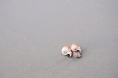 Escudos do mar com a areia como o fundo Fotos de Stock Royalty Free