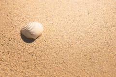 Escudos do mar com a areia como o fundo Foto de Stock Royalty Free