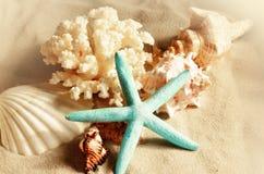 Escudos do mar com a areia como o fundo seashells imagem de stock