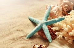 Escudos do mar com a areia como o fundo seashells fotografia de stock
