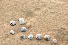 Escudos do mar com a areia como o fundo, selecti Imagem de Stock