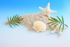Escudos do mar com areia imagens de stock royalty free