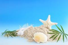 Escudos do mar com areia fotografia de stock royalty free