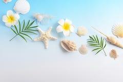 Escudos do mar com flores fotografia de stock royalty free