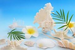 Escudos do mar com flores imagens de stock