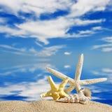 Escudos do mar e peixes da estrela foto de stock royalty free