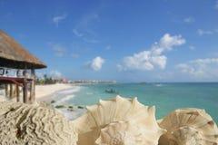 Escudos do mar em Playa del Carmen Quintana Roo imagem de stock
