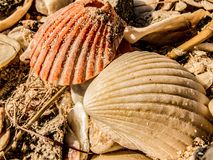 Escudos do mar em uma praia Imagem de Stock Royalty Free