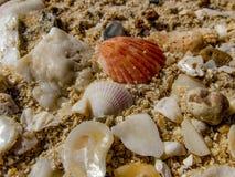 Escudos do mar em uma praia Imagens de Stock Royalty Free