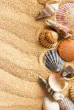 Escudos do mar na areia foto de stock