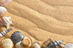 Escudos do mar na areia imagens de stock royalty free