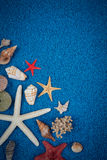 Escudos do mar na areia foto de stock royalty free