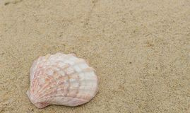 Escudos do mar na areia com espa?o da c?pia para o texto fotografia de stock royalty free