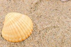 Escudos do mar na areia com espa?o da c?pia para o texto foto de stock royalty free