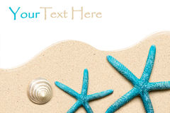 Escudos do mar na areia Fundo da praia do verão Vista superior Fotos de Stock Royalty Free