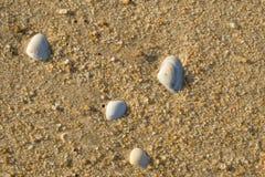 Escudos do mar na areia molhada na praia imagens de stock
