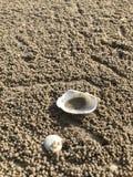 Escudos do mar na areia Praia do verão Adultos novos fotos de stock royalty free