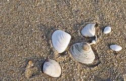 Escudos do mar na praia fotos de stock
