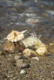 Escudos do mar na praia fotografia de stock