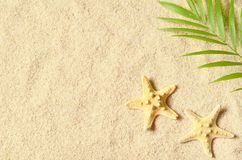 Escudos do mar na praia arenosa Fundo do verão Vista superior fotografia de stock royalty free