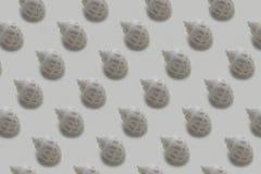 Escudos do mar no fundo branco foto de stock royalty free