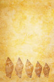 Escudos do mar no fundo de Grunge Imagem de Stock