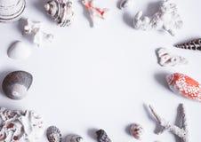 Escudos do mar, pedras, mexilhões e quadro dos corais imagem de stock royalty free