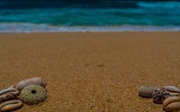 Escudos do oceano na costa arenosa do oceano foto de stock