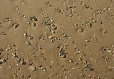Escudos do Seashore e fundo da areia Imagem de Stock