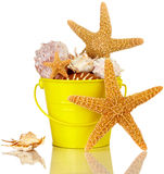 Escudos dos Starfish e do mar na cubeta amarela da praia Fotografia de Stock