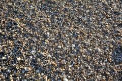 Escudos e areia Foto de Stock
