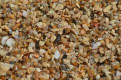 Escudos e areia do mar para o papel do fundo ou de parede imagem de stock