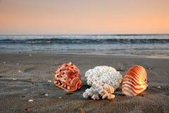 Escudos e corais em uma praia imagens de stock