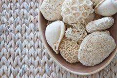 Escudos e coral Imagens de Stock Royalty Free
