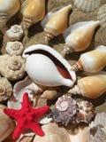 Escudos e estrela vermelha fotografia de stock royalty free
