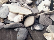 Escudos e pedras do mar Imagens de Stock