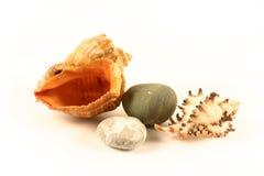 Escudos e pedras do mar Imagem de Stock Royalty Free