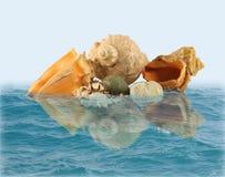 Escudos e pedras do mar na água fotografia de stock