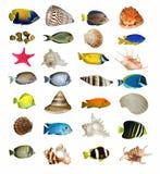 Escudos e peixes isolados Imagens de Stock Royalty Free