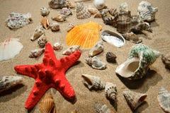 Escudos e star-fish tropicais Foto de Stock Royalty Free
