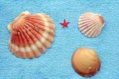 Escudos e starfish Imagens de Stock Royalty Free