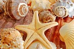 Escudos e starfish Fotos de Stock Royalty Free