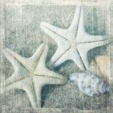 Escudos e starfish fotografia de stock royalty free