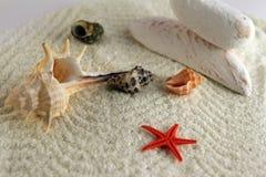 Escudos e starfish Imagem de Stock Royalty Free